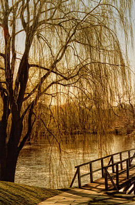 Weeping Willow And Bridge Art Print by Barbara Middleton