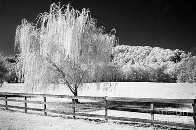 Photograph - Weeping Willow by Paul W Faust -  Impressions of Light