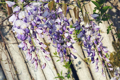 Spring Scenery Mixed Media - Weeping Wisteria by Andee Design