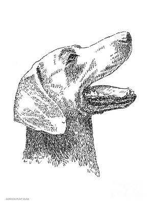 Drawing - Weimaraner-drawing by Gordon Punt