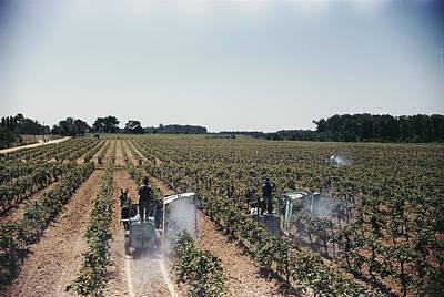 Etc. Photograph - Welchs Grape Vineyard Covers 250 Acres by Willard Culver