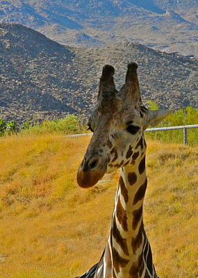 Photograph - Welcome Visitors To The Giraffe Compound  by Kirsten Giving