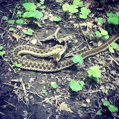 Reptiles Wall Art - Photograph - Well Hello Mista Snake #snake #woods by Natalie Raymond