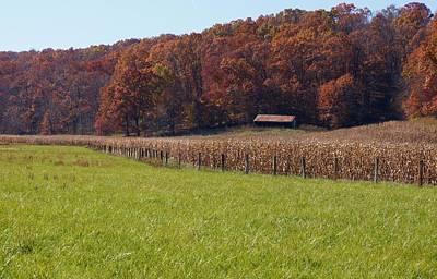 Welsh Hills Meadow Original