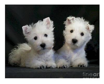 Westie Puppy Digital Art - West Highland Terrier 160 by Larry Matthews