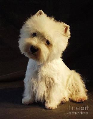 Westie Digital Art - West Highland Terrier 393 by Larry Matthews
