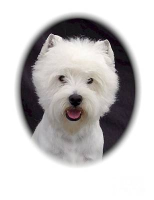 Westie Digital Art - West Highland Terrier 584 by Larry Matthews