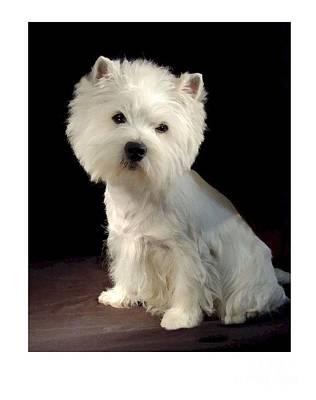 Westie Digital Art - West Highland Terrier 804 by Larry Matthews