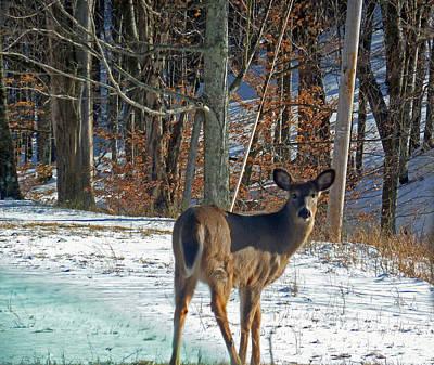 Photograph - West Virginia Deer by Helen Haw