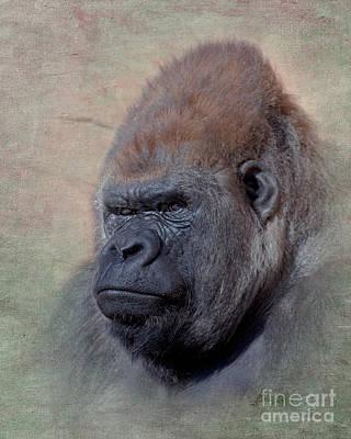 Gorilla Digital Art - Western Lowland Gorilla by Betty LaRue