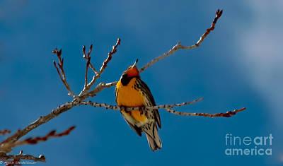 Meadowlark Photograph - Western Meadowlark by Mitch Shindelbower