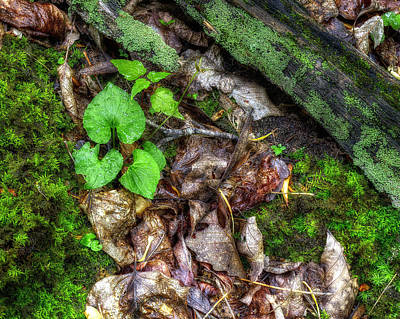 Photograph - Wet Forest Floor by Steve Hurt