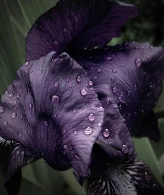 April Shower Photograph - Wet Iris Number Three by Chris Berry