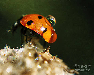 Wet Lady Bug Art Print