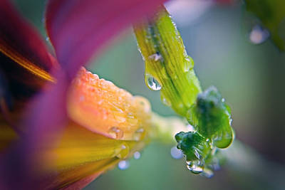 Art Print featuring the photograph Wet Lily by Susan Leggett
