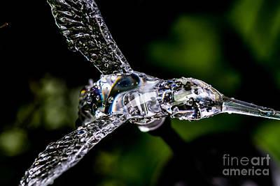 Car Photos Douglas Pittman - Wet Plastic by Mitch Shindelbower