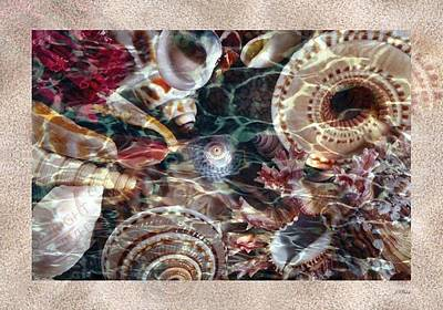 Photograph - Wet Shells Sand by John Neville Cohen