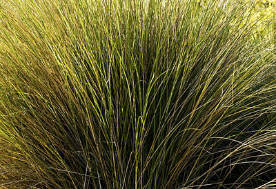 Photograph - Wetland Grass by Rich Franco