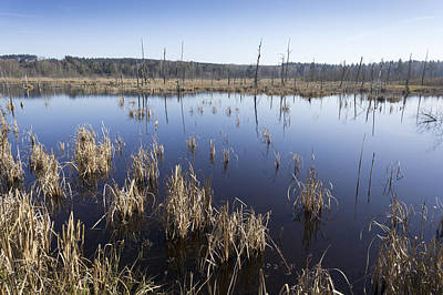 Photograph - Wetland Schwenninger Moos by Matthias Hauser