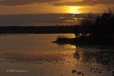 Photograph - Wetlands Sunset Illumination by Mike Fitzgerald