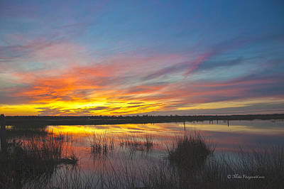Photograph - Wetlands Sunset by Mike Fitzgerald