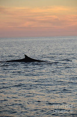 Ocean Photograph - Whale At Suset by Timothy OLeary