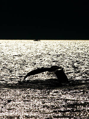 Photograph - Whale In Sunset by Paul Ge