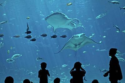 Whale Shark And Manta Ray Original by Jason Blalock