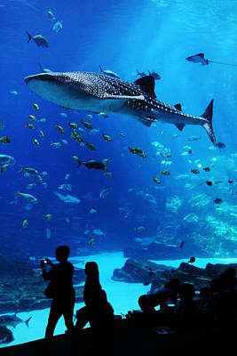 Whale Shark Fly-by Art Print by Brian M Lumley