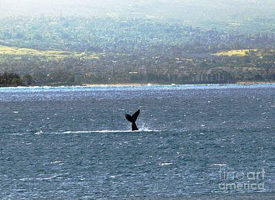Photograph - Whale Tail I by Patricia Griffin Brett