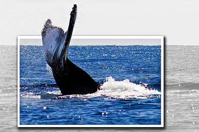 Whale Tail Art Print by Jean Noren