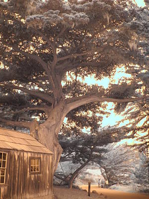 Point Lobos Reserve Photograph - Whaler's Cabin by Jane Linders