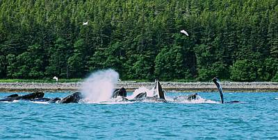 Photograph - Whales Bubble Net Feeding by Eric Tressler
