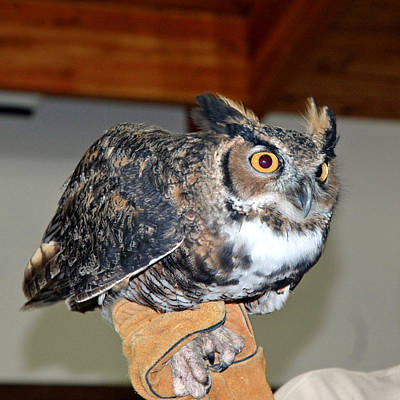 Snowy Owl Photograph - What A Hoot by LeeAnn McLaneGoetz McLaneGoetzStudioLLCcom