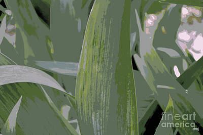 Photograph - What An Iris Leaves by Diane montana Jansson