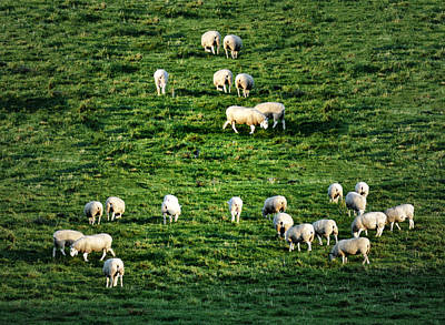 Sheep Digital Art - What The Flock by Bill Cannon