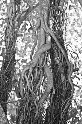Tree Root Photograph - What Trees Know by Betsy Knapp