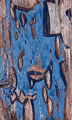Photograph - Whats Left Of The Blue Paint by James Steele