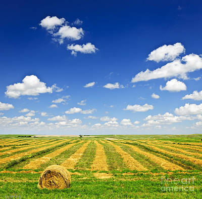 Landscapes Royalty-Free and Rights-Managed Images - Wheat farm field at harvest by Elena Elisseeva