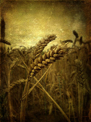 Wheat Field Art Print