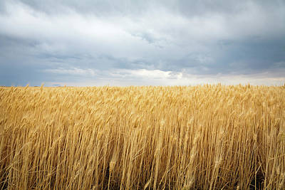 Wheat Field Sky Photograph - Wheat Field Under Dark Clouds by Adrian Studer