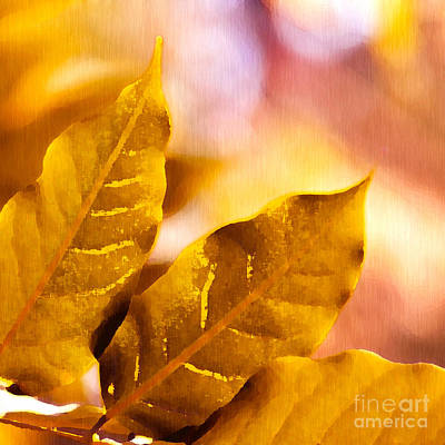 Drawing - When Leaves Turn Gold by Artist and Photographer Laura Wrede