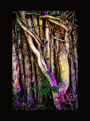 Art Print featuring the photograph When Sound Is Color by Susanne Still