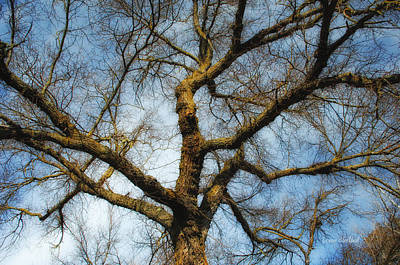 Mighty Oak Photograph - Where Is The Hummingbird by Donna Blackhall