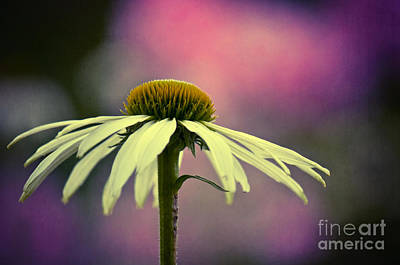 Colorful Photograph - Where Is The Summer by Angela Doelling AD DESIGN Photo and PhotoArt