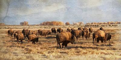 Digital Art - Where The Buffalo Roam by Judy Neill