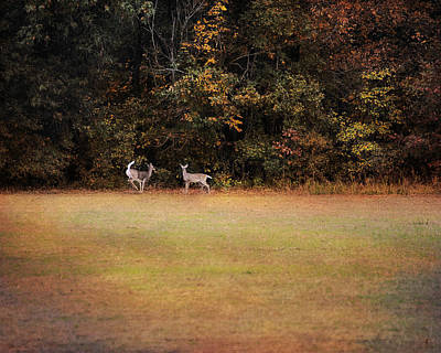 Photograph - Where The Deer Play by Jai Johnson