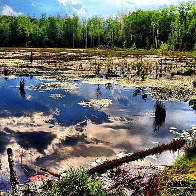 Marsh Photograph - Where The Swamp Things Are by Tawanda Baitmon