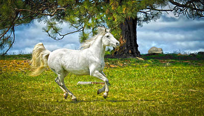 Photograph - Whimsical Horse by Steve McKinzie