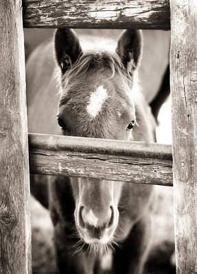 Horse Photograph - Whiskers 2 by Marilyn Hunt
